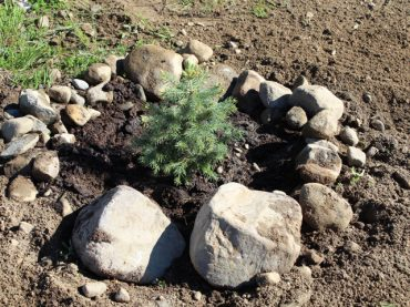 MV plants trees to beautify Lakeshore Park