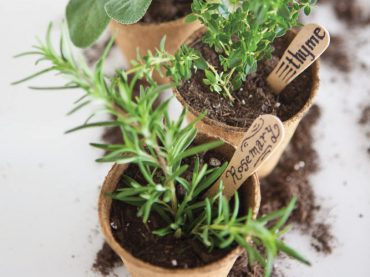 Growing herbs in winter