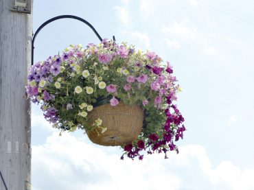 Flowers around town add to the beauty of the region